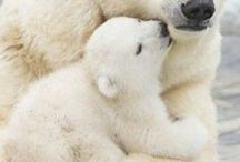 Anne & yavru
