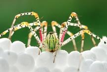 Fauna allsorts / by Lliesb S