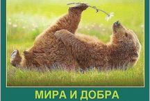 Русский медведь / A russian bear