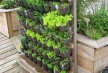 balkon bitkileri