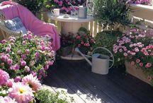 roze tuin