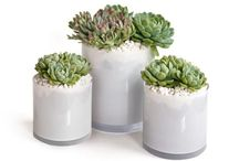 Centerpieces / by Gayle
