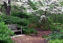 Woodland Garden / Great combinations and plants for a woodland.