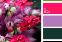 Colour Palette - Tropical Paradise