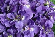 ~Sweet Violets~ / by Marla Corson