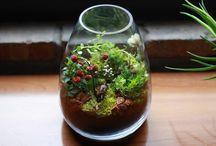 Plants / by Sharon (Ferrari Florist - Santa Cruz, CA) Richardson
