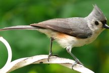 Bird Abodes / Information related to bird houses and bird house plans.