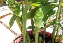 fűszernövények kertészkedés