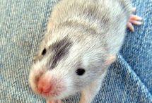 Ratten ❤
