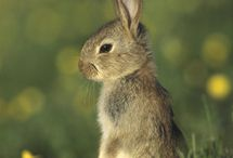 Rabbits / Wildlife