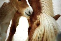 Amazing & Majestic Horses