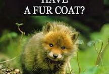 Fur Coats / by Animals Voice