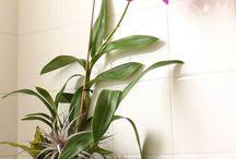Badrums växter