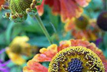 garden / by Kristin Ramirez