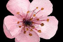 1 Blüten Applikationen sticken