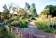 Garden/ Beth Chatto