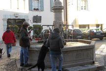 """Dog Walking Venzone 12 gennaio 2014 / """"Foreste, Uomo, Economia nel Friuli Venezia Giulia"""" Visita della mostra permanente e Dog walking dentro e fuori le mura della cittadina medioevale"""