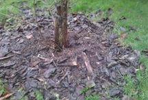 Jardin Soins entretien plantes arbres