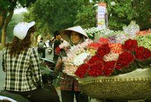 Flower Bikes, Hanoi, Vietnam