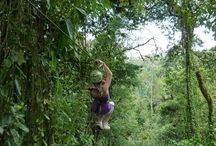 """Costa Rica / The animals, history and culture of Costa Rica, through the lens of an eco-travel volunteer vacation.  If you'd like to contribute, email luxuryandtravel@aol.com with """"Costa Rica - Pinterest"""" in the subject line. / by Jen Miner"""