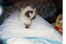 Mis Mascotas / Gollum y Tizón