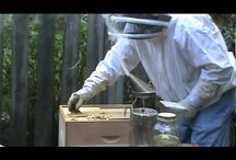 Beekeeping / all about bees their survival and looking after them.