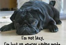 pugs for ever
