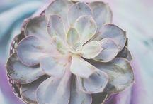My succulents