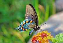 Wildlife photos / Photos taken at my house. / by Beth Hamilton