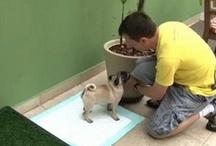 Yoda, Shakira, Pucca & Raul / Cães e papagaio