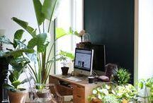 plantes à la maison