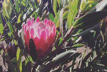 Oou flor* / Flores
