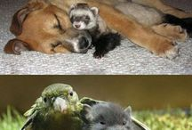 cute and adorable animals
