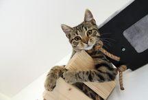 Kočky kočičky koťátka / Designový nábytek pro kočky