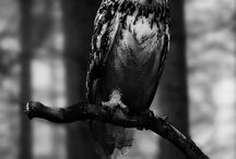 Owls / by Laurie Braman