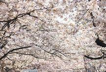 Seoul in spring / Spring 2015