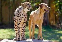 Pretty Animalssss