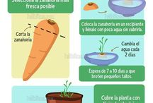 Vegetales en casa