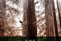 Books | Trees / Arborist studies and stories of our towering, life-giving friends.