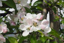 Blüte | Fioritura / Frühling in Lana und Umgebung #visitlana ---  primavera a Lana e dintorni
