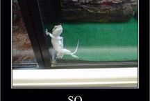 Reptile Humor / Photos of reptiles doing funny things.