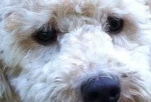 My dog ❤️ / My dog