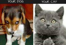 , pisici și catei