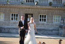 Dogs at Weddings / Photographs were dogs have been guests at weddings in the UK.