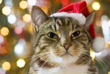 Pet Christmas pictures  / by Chelsi LaVigne