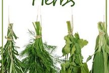Antibiotics herbs