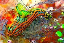 Punk Rocks of the Underwater World