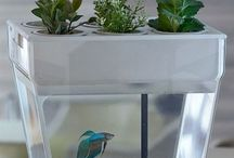Aquarium & More