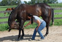 Tips for Horses with Back Problems