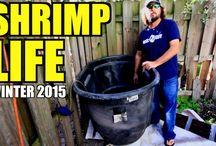 Shrimp Life / by MulletRun Fishing